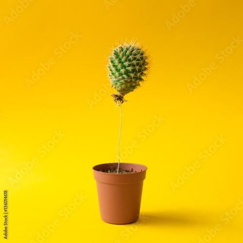 Photo Stands Cactus Cactus balloon in a plant pot. Creative minimal concept.