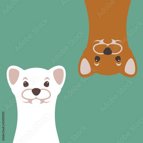 Foto  weasel vector illustration style Flat
