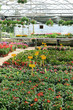 From inside the greenhouse to a commercial garden center