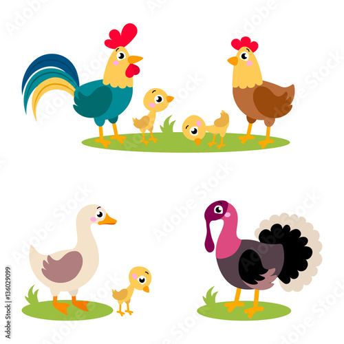 set of popular colorful vector farm birds cute farm birds rooster rh stock adobe com