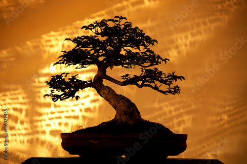 Silhouette Bonsai trees on pot and yellow fabric background