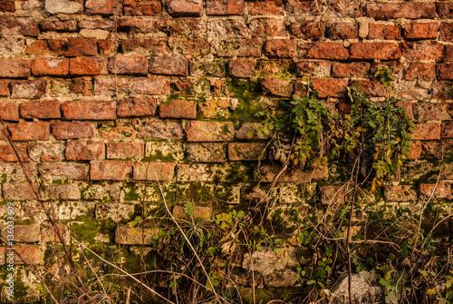 Fototapeta premium Ściana kruszcu