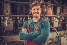 Friendly Farmer Milking Cows A...