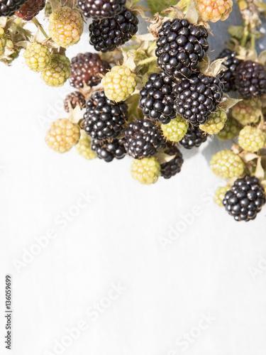 Fotografia, Obraz  Branch of blackberry on grey background