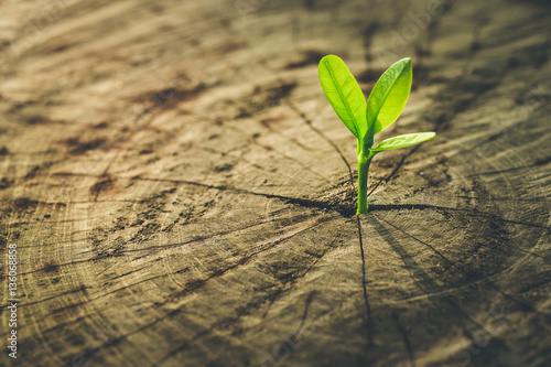 Fotografia  New Life concept with seedling growing sprout (tree).business de