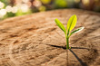 Leinwanddruck Bild - New Life concept with seedling growing sprout (tree).business de