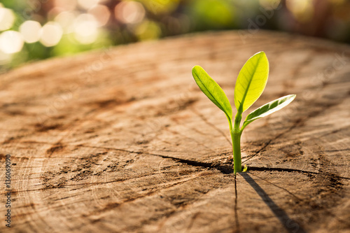 Leinwand Poster New Life concept with seedling growing sprout (tree).business de