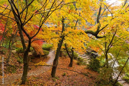 Tuinposter Weg in bos Autumn japanese garden