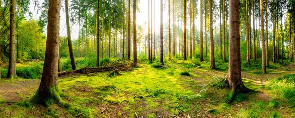 Wald Panorama bei Sonnenaufgang