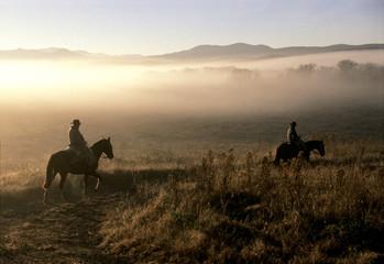 caballos y gauchos