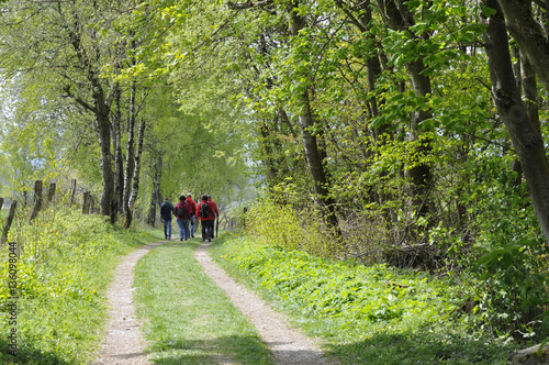 wandergruppe auf einem naturweg Poster