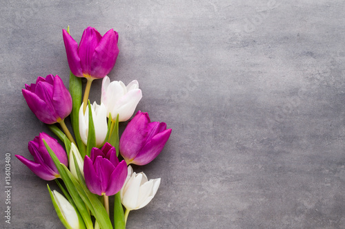 Fotografie, Obraz  Tupil on the gray background. Spring greeting card.