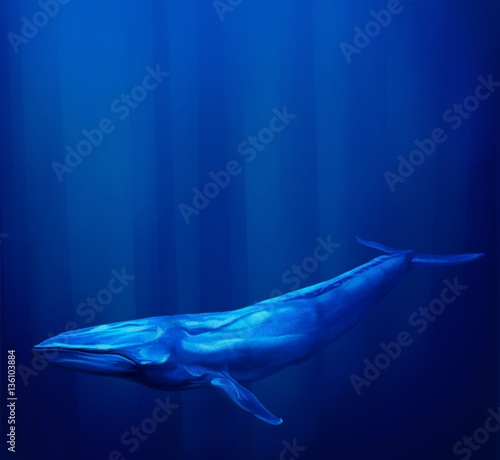 Blue Whale underwater with streams of sunlight.