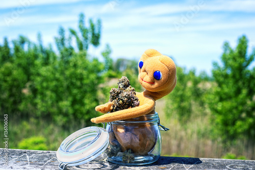 Photo Stands Green Dried cannabis buds (Purple Alien Strain) with toy and jar- medi