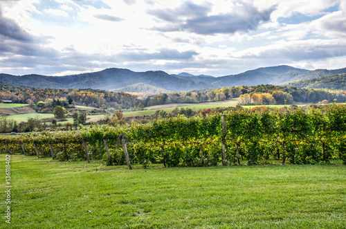 Fotografie, Obraz  Autumn vineyard hills during in Virginia with yellow trees