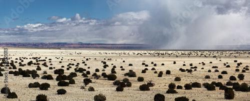 Photo  Windswept Landscape of Wupatki National Monument near Flagstaff Arizona
