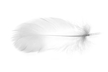 Bird Feather On A White Backgr...