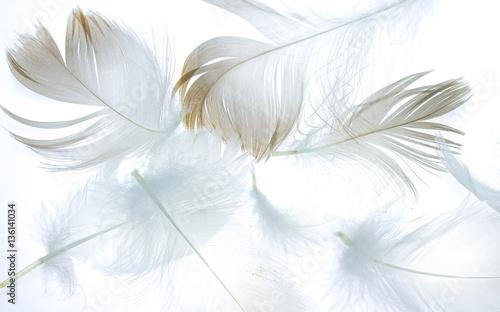 pioro-ptak-na-bialym-tle-jako-tlo-dla-projektu