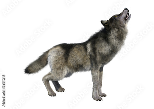 Photo  3D Rendering Gray Wolf on White