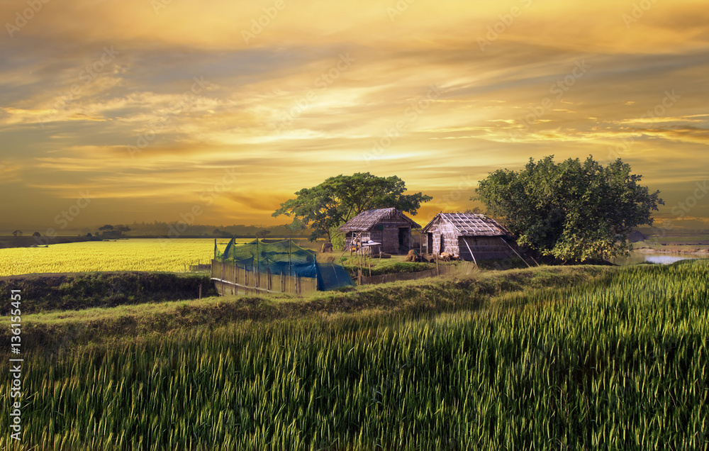 Fototapety, obrazy: Beautiful huts in the village of bangladesh during sunset
