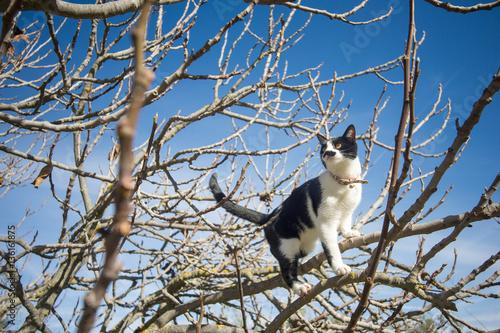 Fotografia, Obraz  gato