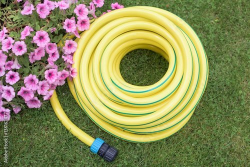 Fotografie, Obraz  Gardening- hose-pipe on the grass
