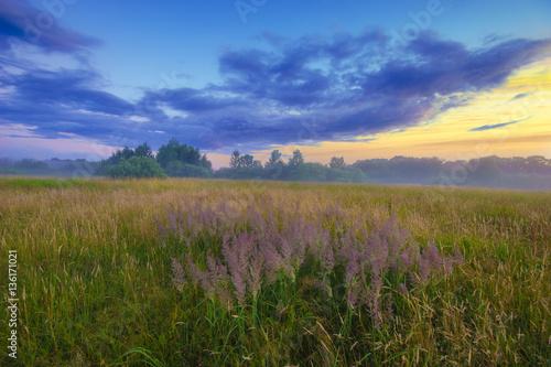 Foto op Plexiglas Weide, Moeras beautiful, colorful morning on a spring meadow