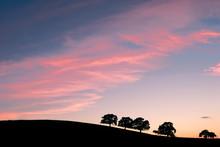 Oak On The Hills Silohoutte