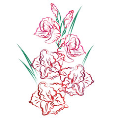 NaklejkaGladiolus. Hand drawn stylized color vector brush sketch of red gladiolus flowers for greeting cards.