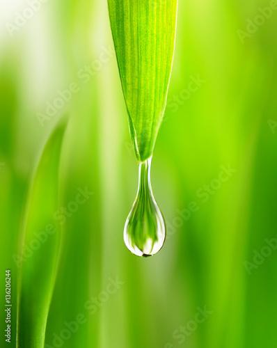 duze-krople-deszczu-na-wiosne