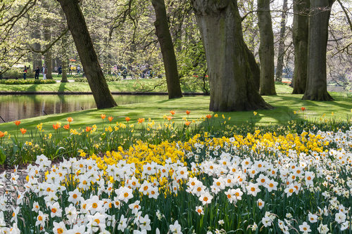 Wall Murals Narcissus The Keukenhof, Dutch Public Spring Flowers Garden, Lisse, Zuid H