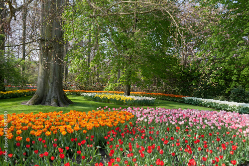 Garden Poster Narcissus The Keukenhof, Dutch Public Spring Flowers Garden, Lisse, Zuid H