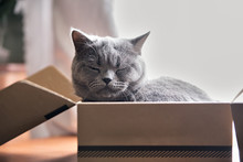 Beautiful Grey Cat Sleeping In...