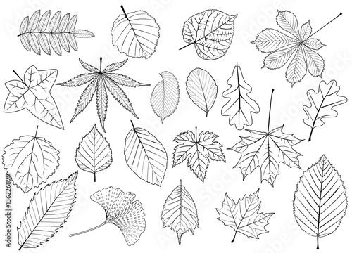 Obraz tree leaves set, silhouettes leaf, - fototapety do salonu