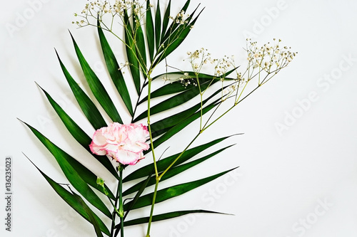 Deep green leaves and carnation flower with pink edges on a white deep green leaves and carnation flower with pink edges on a white background beauty blogger mightylinksfo