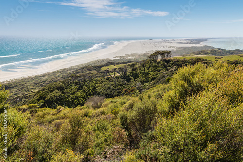 Photo Stands New Zealand manuka bush at Farewell Spit, Golden Bay, New Zealand