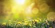 Leinwandbild Motiv Frühlingswiese mit Löwenzahn und einer Biene im Sonnenschein