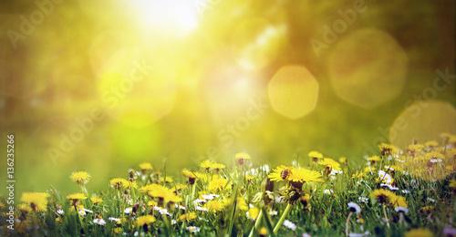 Deurstickers Lente Frühlingswiese mit Löwenzahn und einer Biene im Sonnenschein