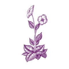 Purple-Floral6