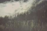 Foggy Wilderness Forest - 136245661