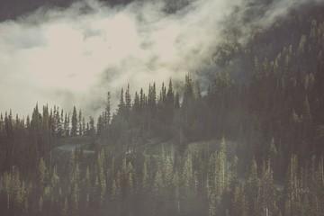 Fototapeta Foggy Wilderness Forest