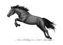 Horse Running And Jumping Vect...