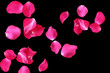 Abstract of Rose petals on black background