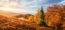 Birch Forest In Sunny Afternoon While Autumn Season