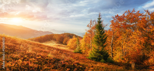 Aluminium Prints Autumn birch forest in sunny afternoon while autumn season