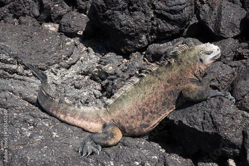Papiers peints Hyène Galapagos wonder