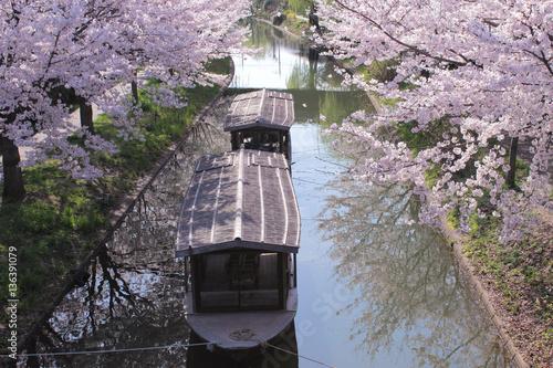 Spoed Foto op Canvas Kyoto 京都 伏見 十石船と桜