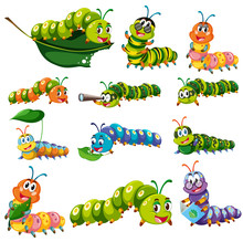 Different Color Caterpillar Ch...