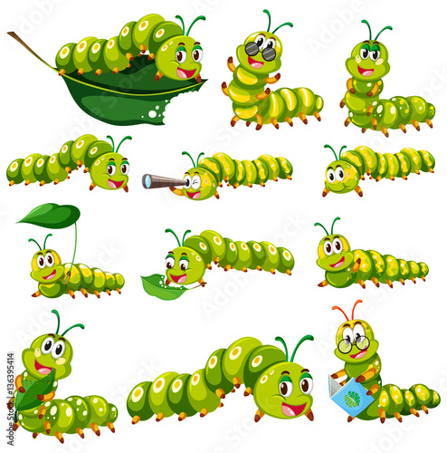 Cuadros en Lienzo  Green caterpillar character in different actions