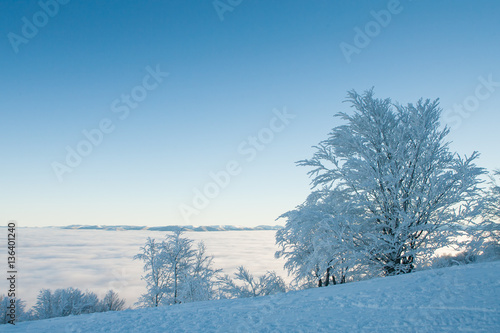 Printed kitchen splashbacks Purple Alone frozen tree on winter field and blue sky with rare clouds